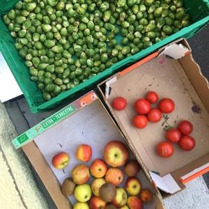 Gemüse Raupe Immersatt 1
